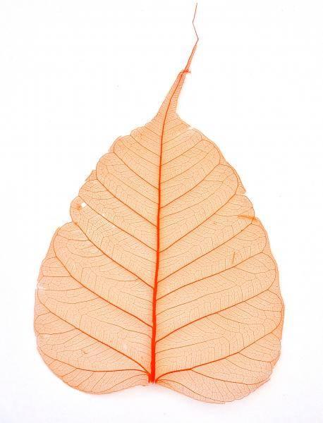 Sušený list na nechty - oranžový