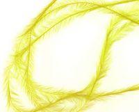 Pierka - Tenké žlté