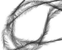 Pierka - Tenké šedé