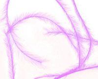 Pierka - Tenké levanduľové