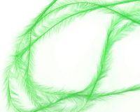 Pierka - Tenké zelené