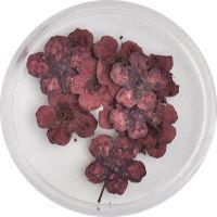 Sušené kvety klasic - AP1