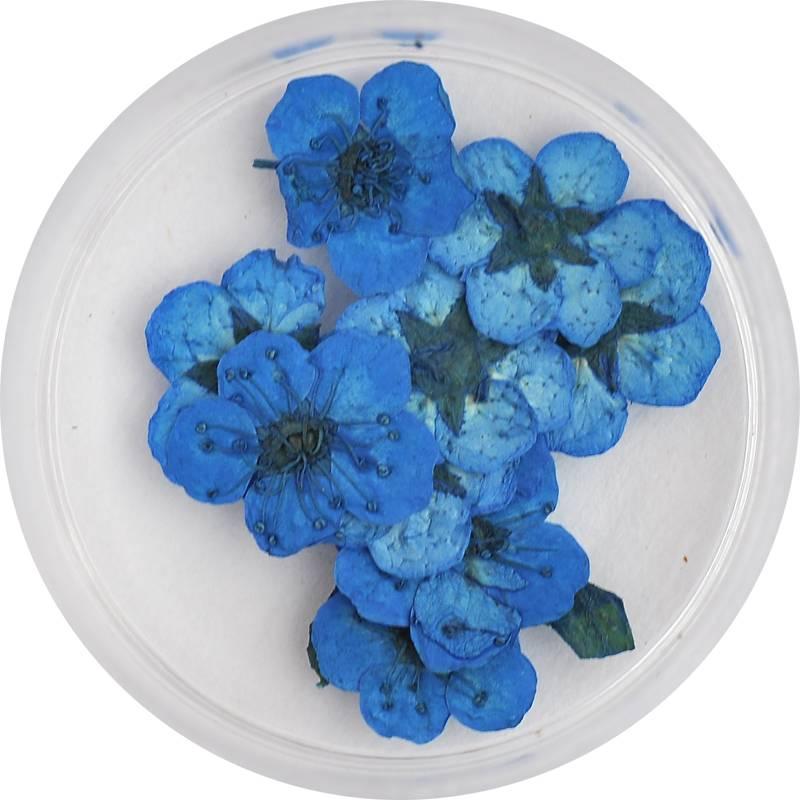 sušené kvety na zdobenie gélovách a akrylových nechtov