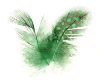 Pierka - Bodkované zelené