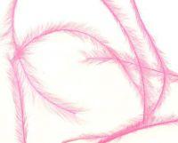 Pierka - Tenké ružové