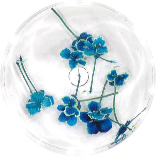 Sušené kvety DF9