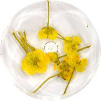 Sušené kvety DF7