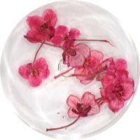 Sušené kvety DF4