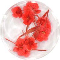 Sušené kvety DF11