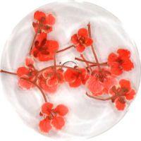 Sušené kvety DF6