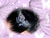 Tattoo šablónka - Motýľ Lanvin