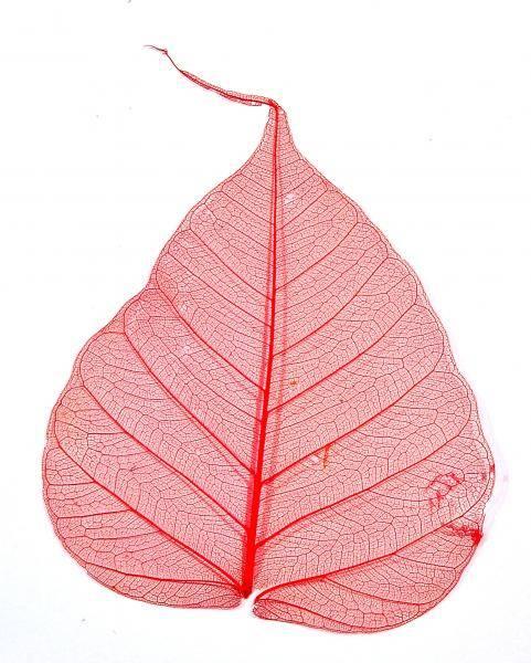 Sušený list na zdobenie nechtov - skeleton