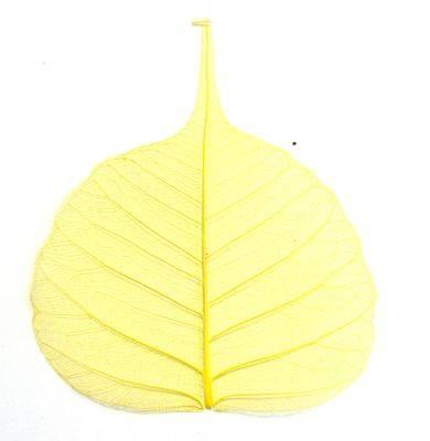 Sušený list na zdobenie nechtov - pieskový