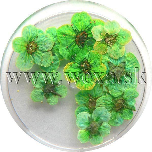 Sušené kvety klasic - AP spring