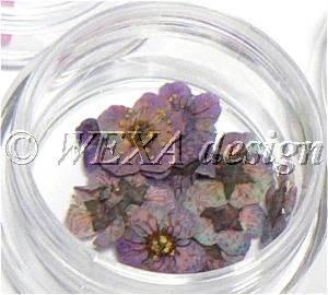 Sušené kvety klasic - AP multicolor