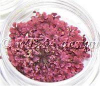 Sušené kvety strapaté - AP pink