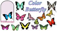 Nail Tattoos - Color Butterfly - 85