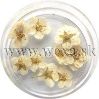 Sušené kvety klasic - AP white