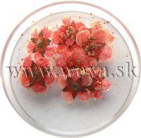 Sušené kvety klasic - AP red