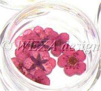 Sušené kvety klasic - AP magenta