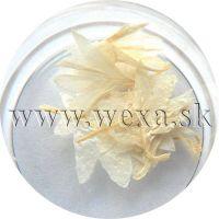 Sušené kvety - Kalíšky 1