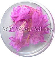 Sušené kvety - Kalíšky 5