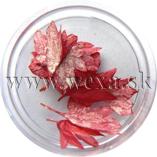 Sušené kvety - Kalíšky 6