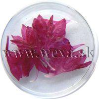 Sušené kvety - Kalíšky 7
